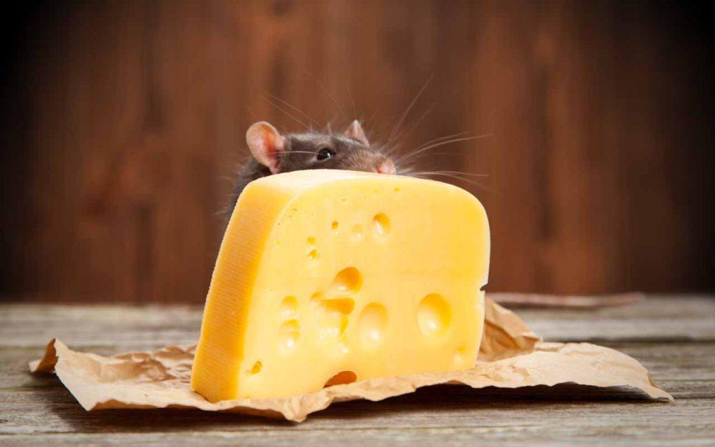 الجبن دائما يتحرك هذا اهم قانون في الحياة