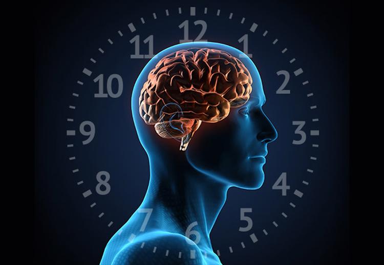 الزمن البيولوجي من صنع الدماغ