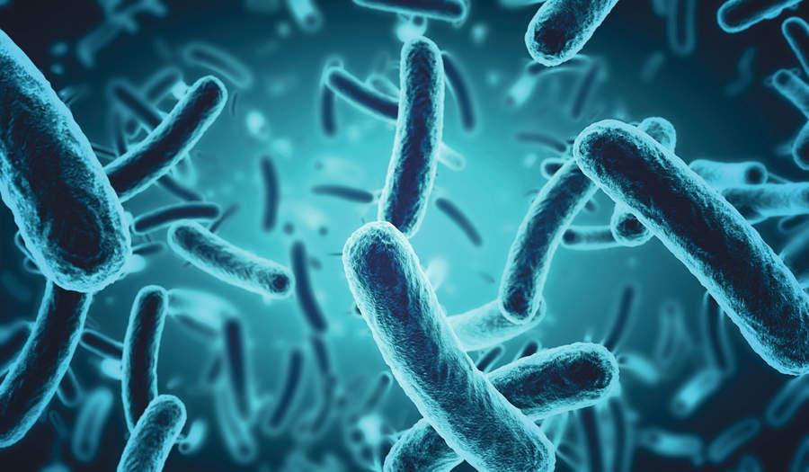 الميكروبات على جسم الانسان منها الضار ومنها النافع