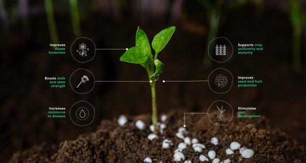 تستخدم مادة الفوسفات بالاساس في صناعية الاسمدة الزراعية